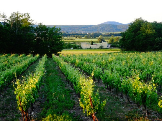 Vineyard view from our Ardèche gite, Photo by Nathan Mizrachi